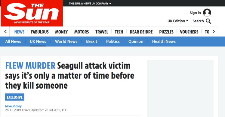 海鸥数量激增让英国人头大:袭击人类,还叼宠物