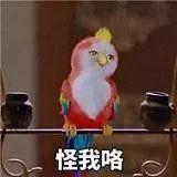 鸟儿半夜被偷,只因它说了句…网友:鸟也别和陌生人说话