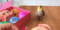 千万别养一只会说话的鹦鹉