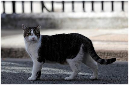 """唐宁街""""公务猫""""传奇:流水的英国首相,铁打的捕鼠大臣"""
