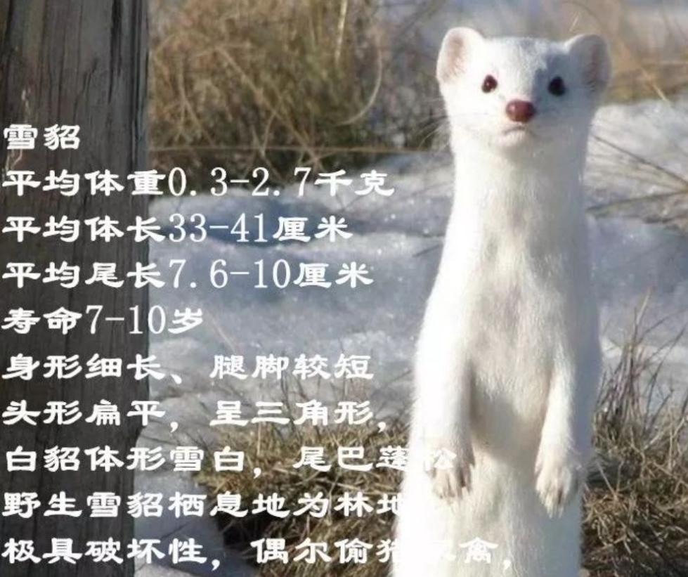 济南一小区惊现白色神秘动物!下嘴挺狠,有人已被