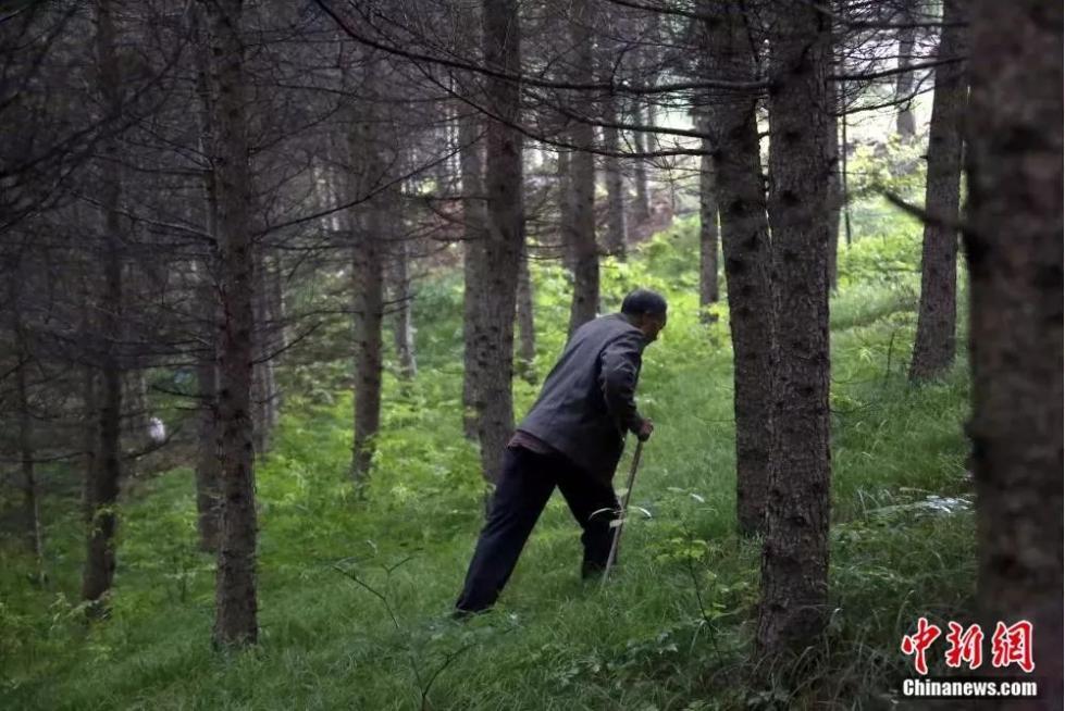 """1718k文学展开扫黑除恶督督导作业每棵树都是他的命根子,""""独腿侠""""32年""""跪地""""造林千余亩"""