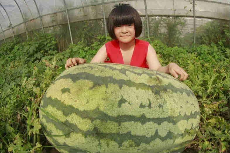 """139斤!江苏泗洪魏营种出""""西瓜王"""""""
