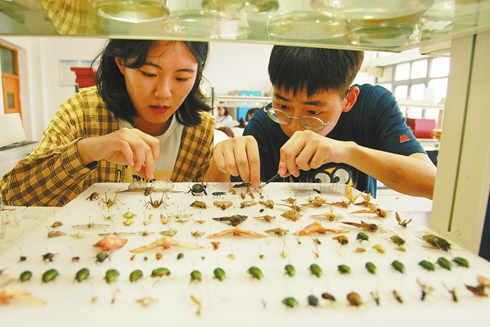 大学生暑假作业抓100个科以上昆虫