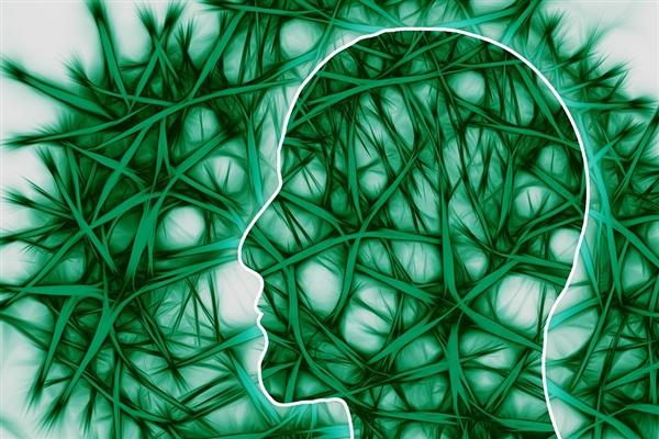 科学家发现了与复杂的动机、奖励系统有关的细胞