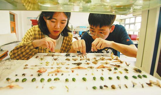 特殊的作业:大学生暑假作业抓100个科以上昆虫