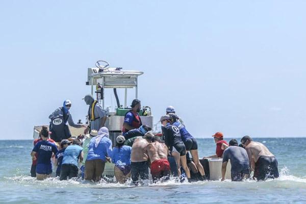 领航鲸在美国佛州搁浅 众人齐力助其重归大海