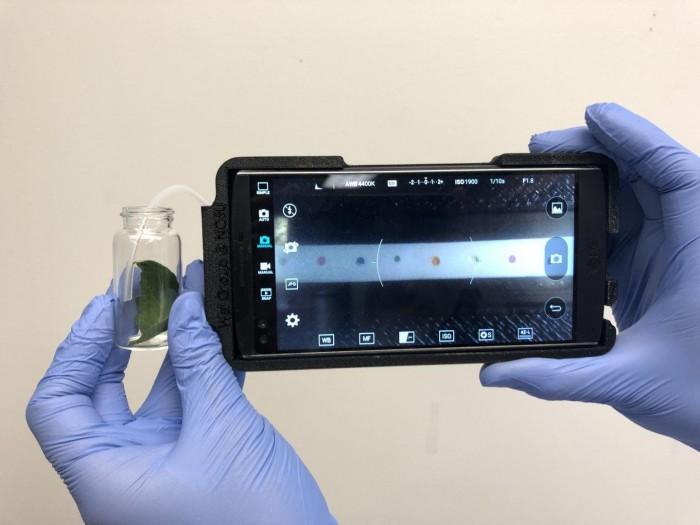 智能手机设备可通过斑点识别农作物疾病