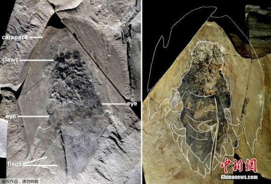 加拿大出土5.06亿年前海洋生物完整化石(图)