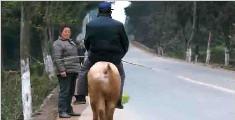 真奇葩!68岁老大爷喜欢骑猪出门,土豪出价5万也不卖