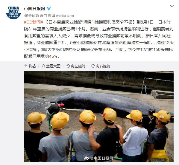 日本重启捕鲸满1个月 捕捞顺利但需求不振