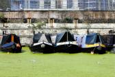 连日高温导致伦敦河流绿藻成灾
