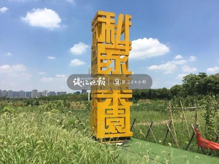 """杭州这片私家菜园遭遇偷菜贼!""""地主群""""气炸:这都不放过?"""
