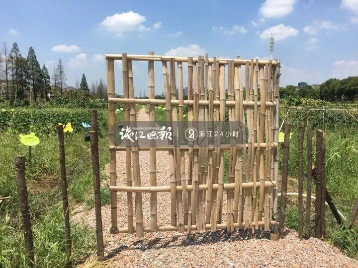 杭州这片私家菜园遭遇偷菜贼