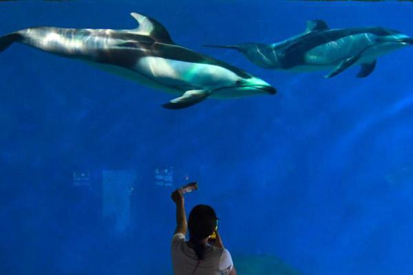 """重庆首对""""白边海豚""""正式亮相"""