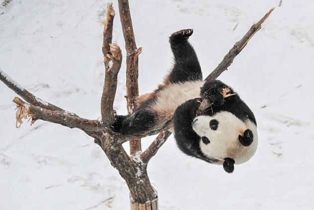 全民健身日围观动物达人轻松玩转举铁瑜伽