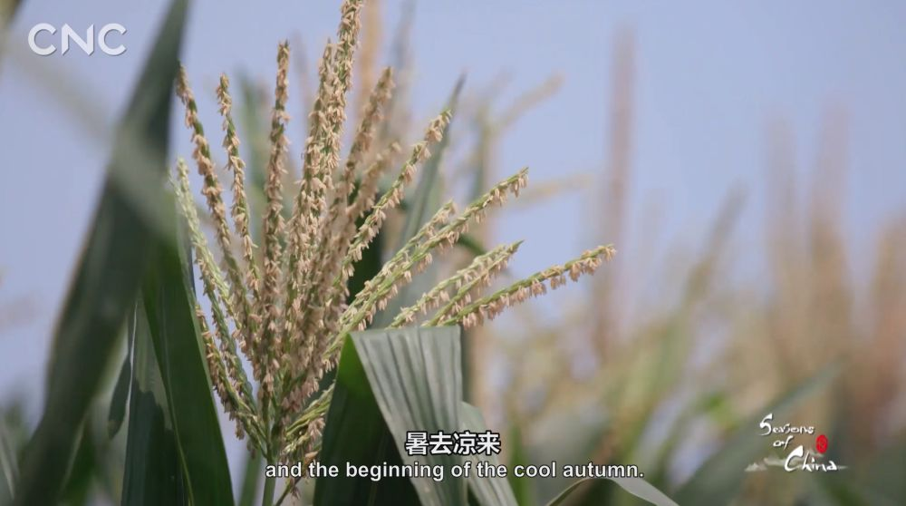 二十四节气大型纪录片《四季中国》   第十三集 立秋