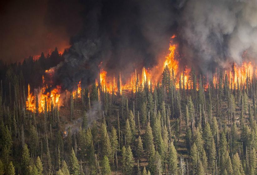 俄罗斯森林大火持续肆虐 过火面积超1.5万平方公里