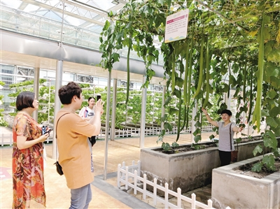 千紫缘:四方游客带来村庄巨变