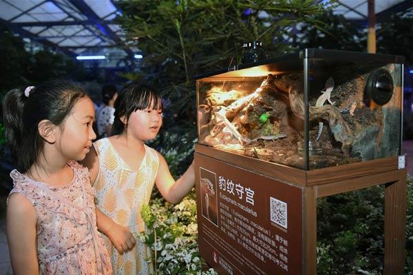 北京:夏夜中探寻神奇动物