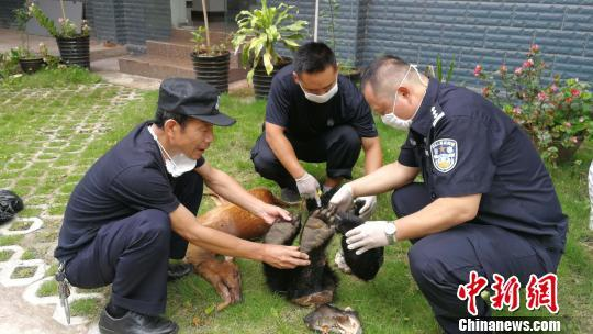 男子在云南边境购运黑熊制品 被警方查获