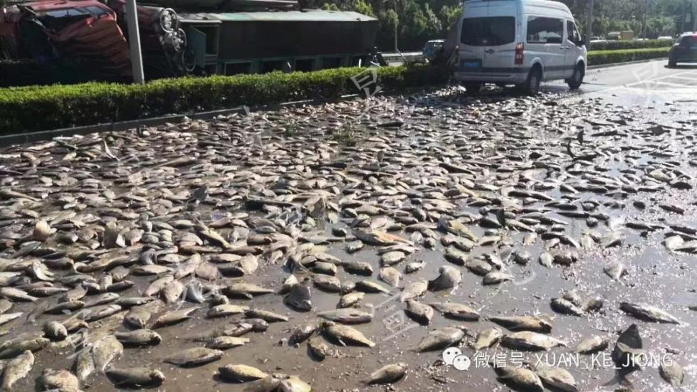 活久见!几千条活鱼铺满上海街头扑腾!发生了什么?