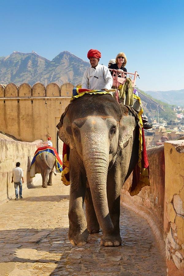 印度动物保护者纪念世界大象日,呼吁停止骑行大象