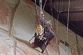 美国女子拍惊人一幕:巨型蜘蛛织网猎杀蝙蝠