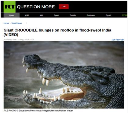 """鳄鱼在屋顶""""晒太阳""""?洪水后男子家中迎来"""""""