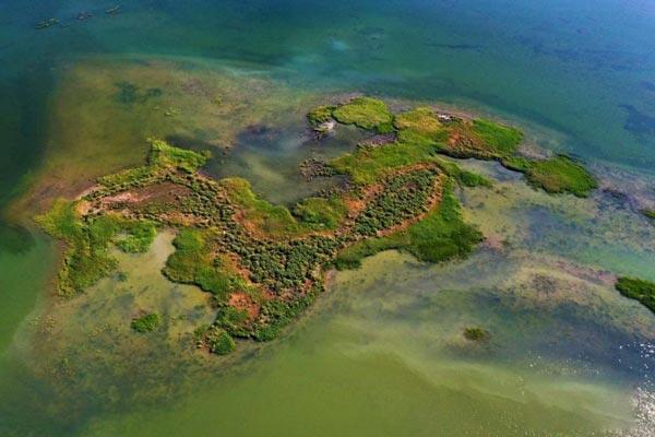 航拍甘肃黑河湿地天鹅湖 镶嵌戈壁之上的绿宝石