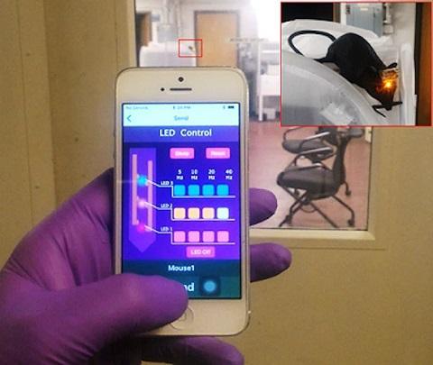 KAIST研制新型脑机接口 有助药物输送和实现远程控制