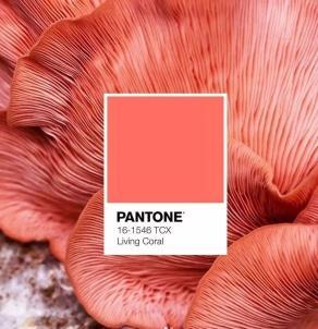 这个夏季,一起来寻找彩妆中的潘通流行色!
