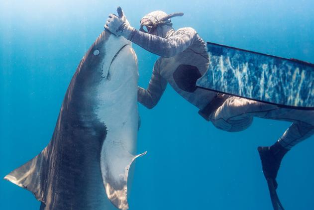 """鲨语者来了!潜水员把凶狠虎鲨盘成了""""乖宝宝"""""""