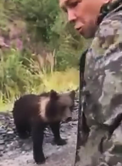 俄罗斯一醉酒男子伸手逗弄小熊崽 被咬住手慌乱挣脱