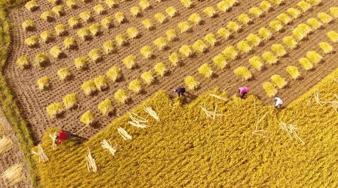 """阿里巴巴启动丰收节 打造农产品销售的""""双11"""""""
