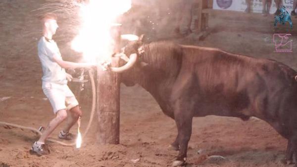 残忍!西班牙公牛牛角被套上金属支架并点火