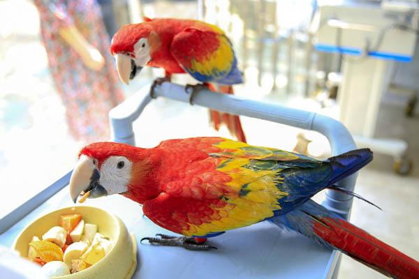 孵化季走私244枚珍贵鹦鹉蛋被查 32只雏鸟野生动物园成长