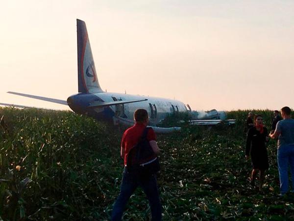 俄一客机遭鸟群袭击双发动机失效 成功迫降玉米地