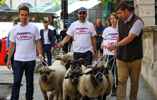 """""""无协议脱欧""""或致一半农场倒闭 英国农民牵羊上街表达诉求"""