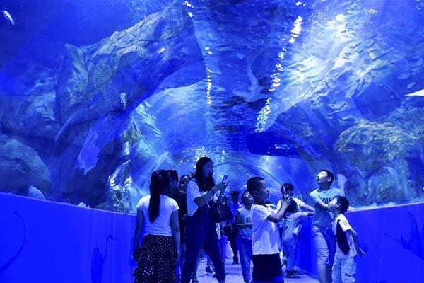 世界海拔最高的大型综合海洋馆在高原古城西宁开馆