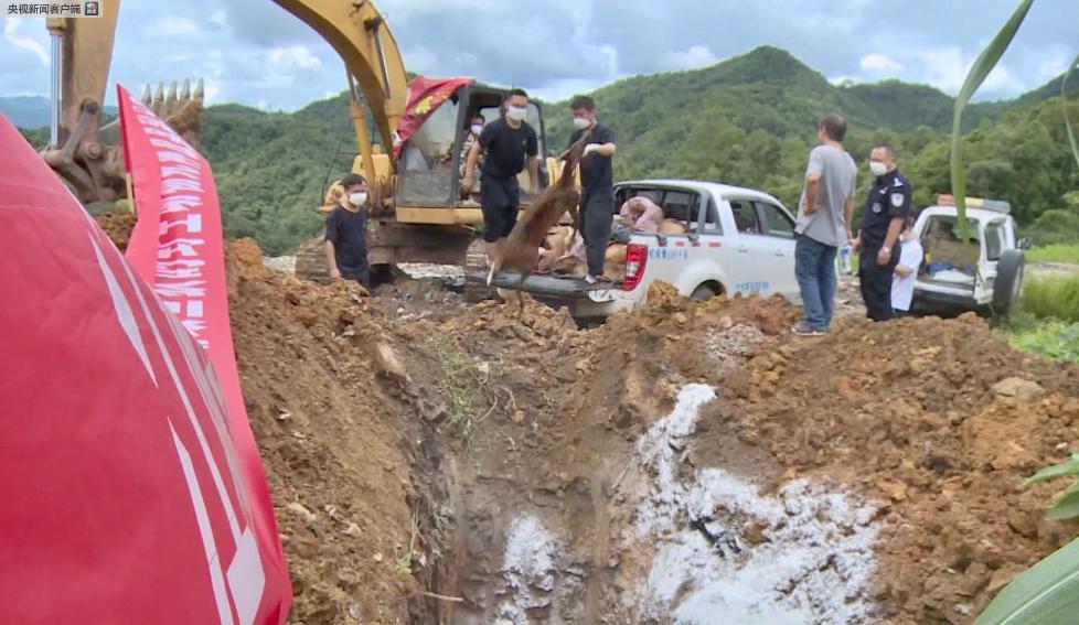 数量近一吨!云南普洱江城县销毁近期查获的野生动物死体及制品