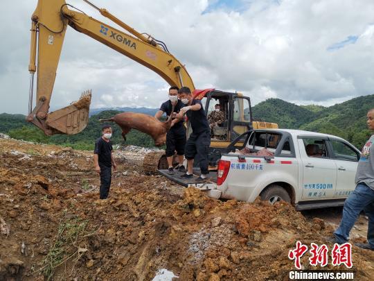 云南江城公开销毁近1吨野生动物死体及制品