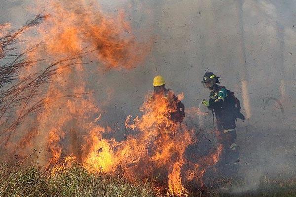 玻利维亚山火持续 已烧毁大面积森林和农田