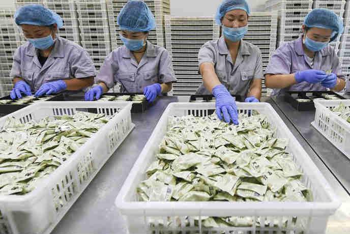 河北景县:黑蒜深加工产品受青睐