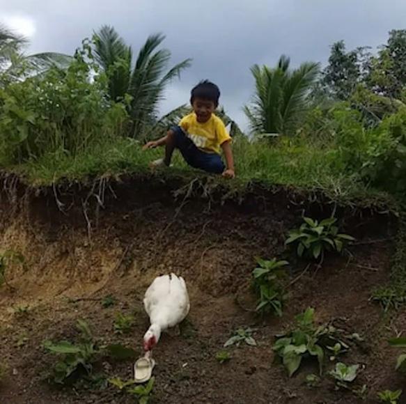 萌化人心!菲律宾一男孩鞋子掉泥里 热心鸭子帮忙捡回