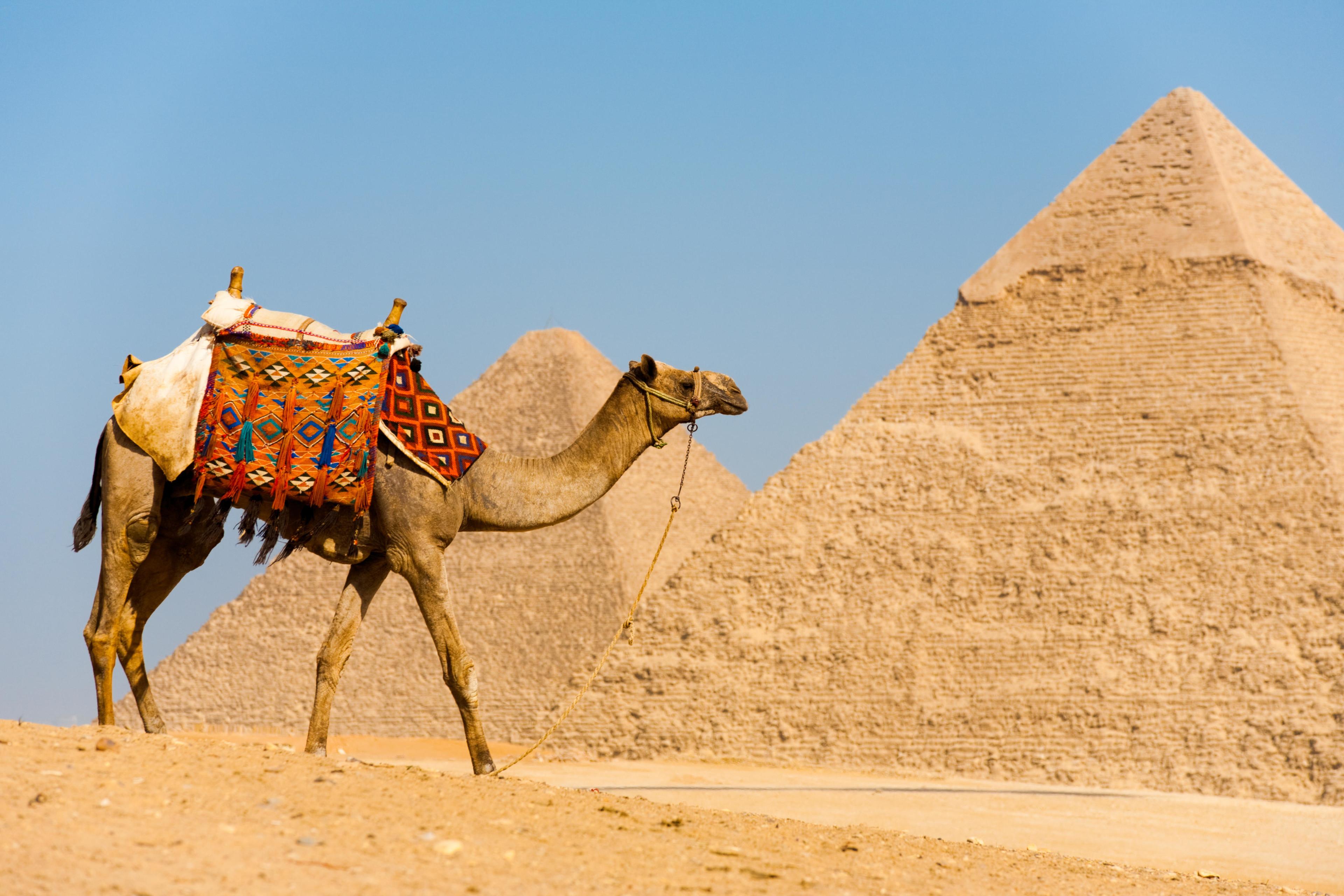 驻埃及使馆再次提醒中国游客乘机时注意看管好个人财物