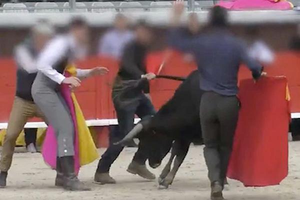 残忍!法国斗牛学校一公牛因过度训练而崩溃倒下