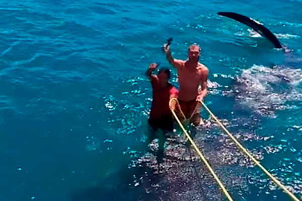 """墨西哥两男子骑在鲸鲨背上""""冲浪""""引发众怒"""