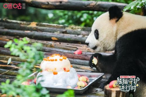 """百万粉丝为大熊猫""""成实""""庆生背后 咪咕让文化传播更浸入人心"""