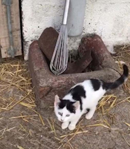 英国61岁农夫拍摄自家农场动物走红网络
